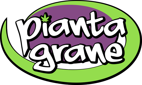 Seed Grow Hemp Shop - Piantagrane Frascati