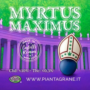Myrtus-Maximus