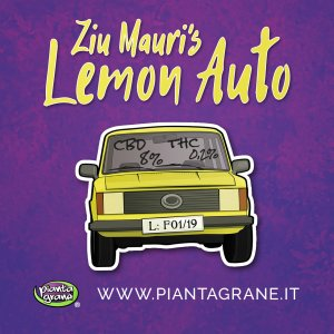 Ziu mauri's lemon auto piantagrane growshop