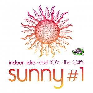 Sunny #1