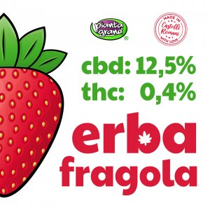 Erba-Fragola-Infiorescenze-CBD