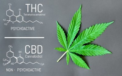 CBD vs THC: qual è la differenza?