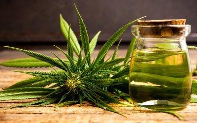 Gli effetti della Cannabis